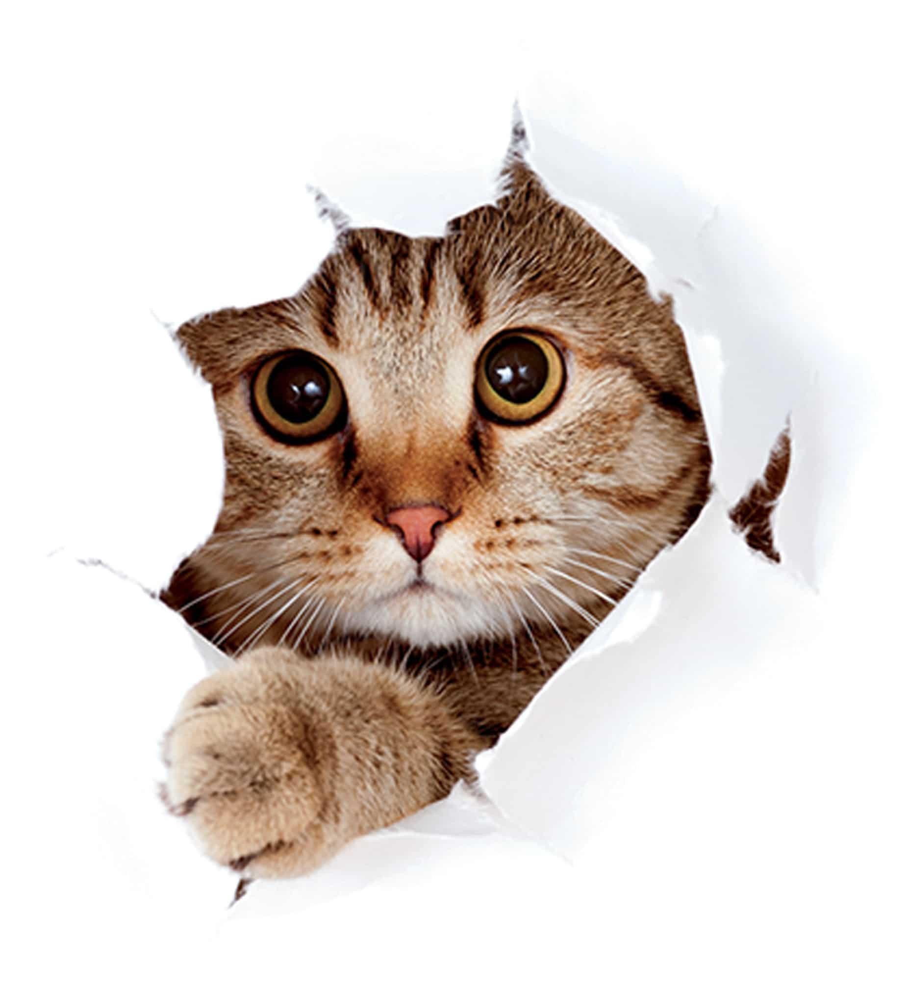 Kedi Maması Ve Aksesuarları Pet Ihtiyaç