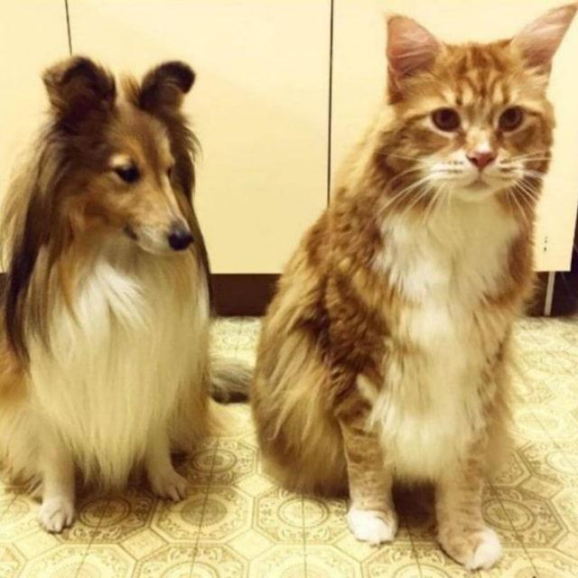 büyük kediler