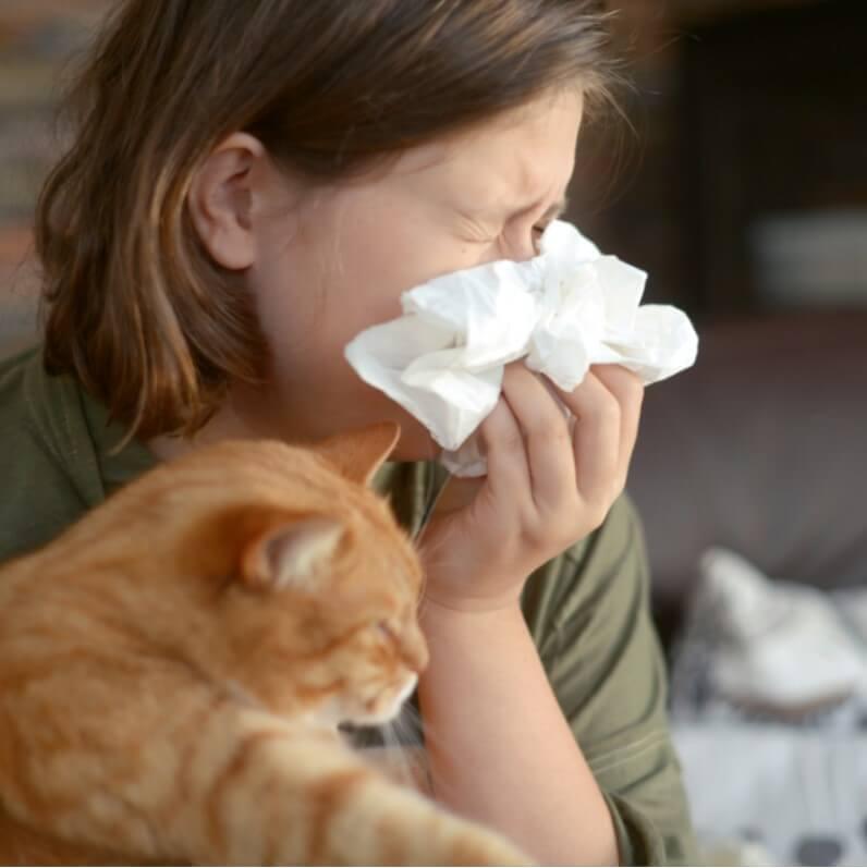 evcil hayvan alerjisi
