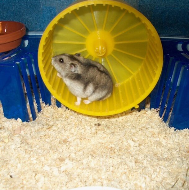 hamster çarkı