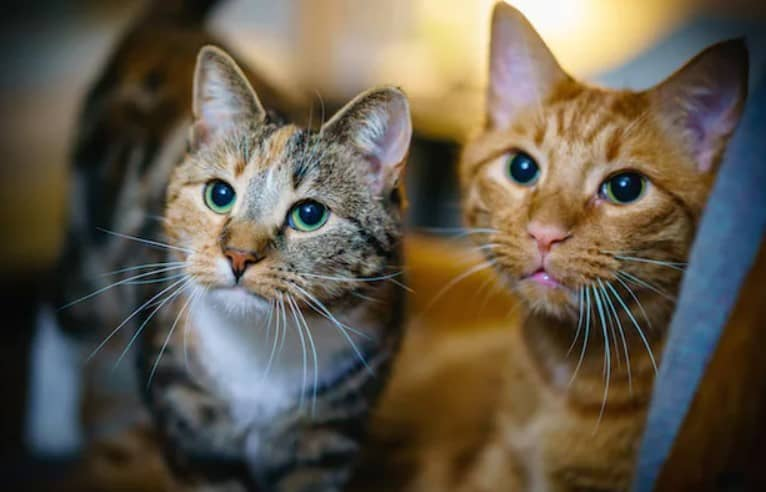 kedi isimleri 2
