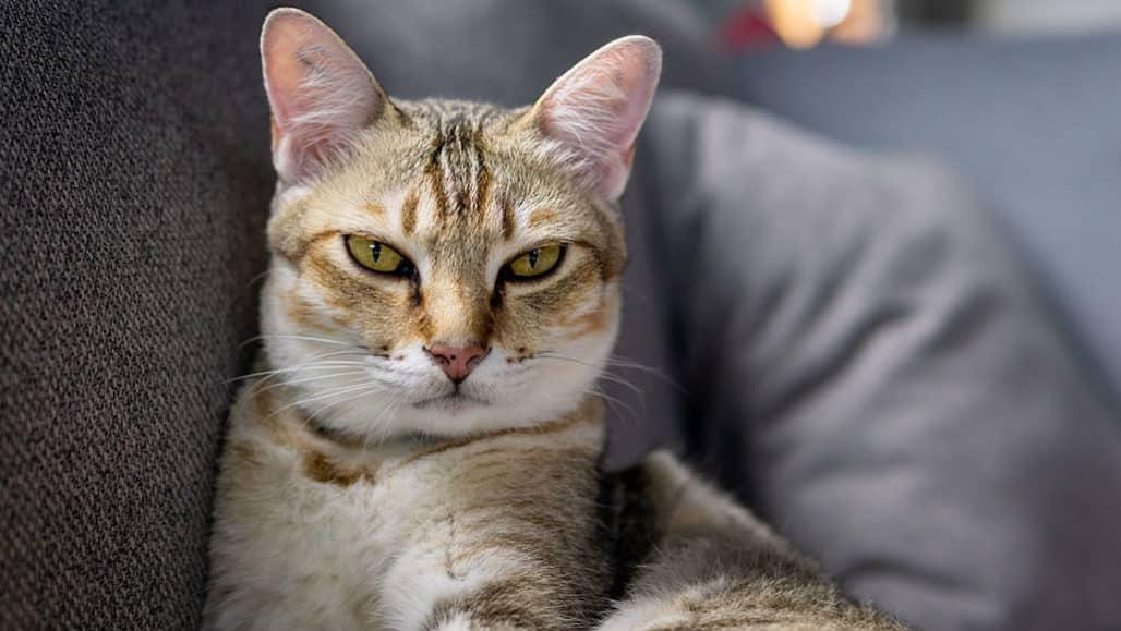 kedi isimleri 3