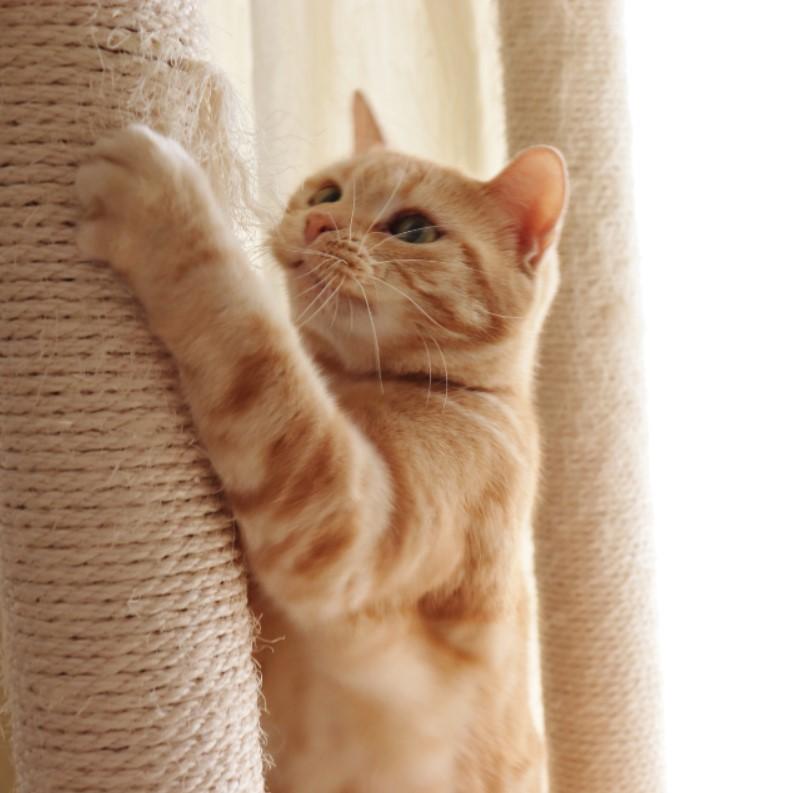 kedi tırnağı kesme