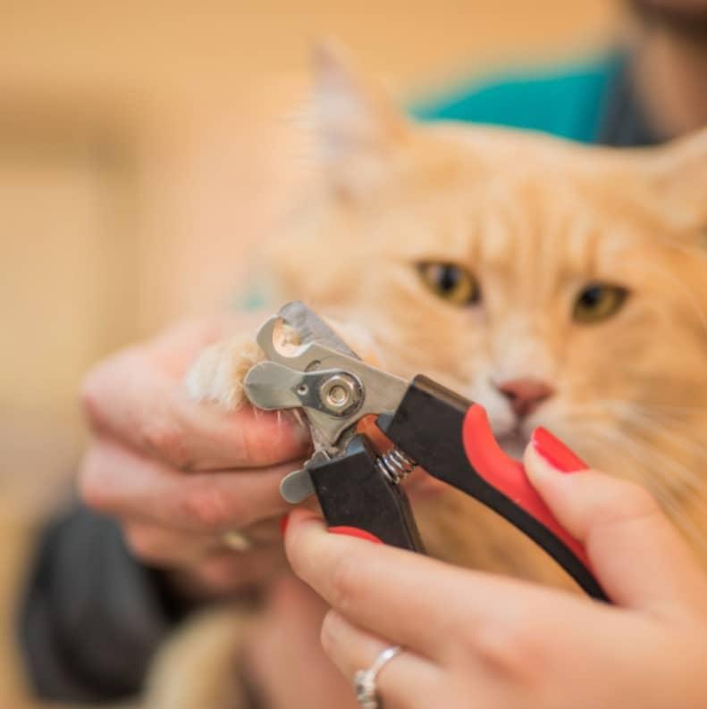 kedi tırnağı nasıl kesilir