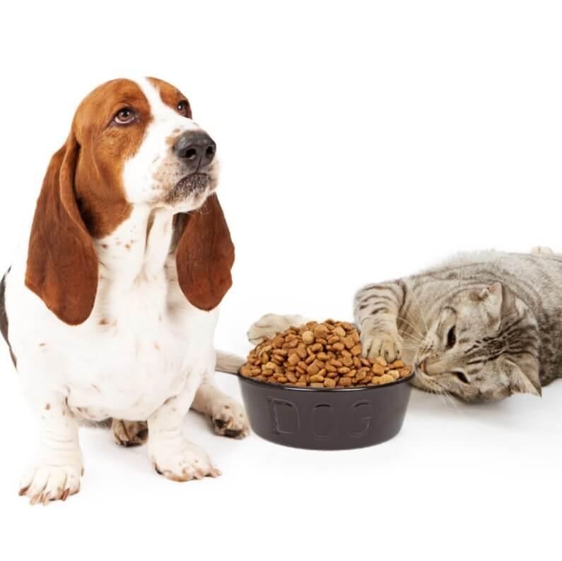 kedi ve köpek mamaları neden taze olmalı