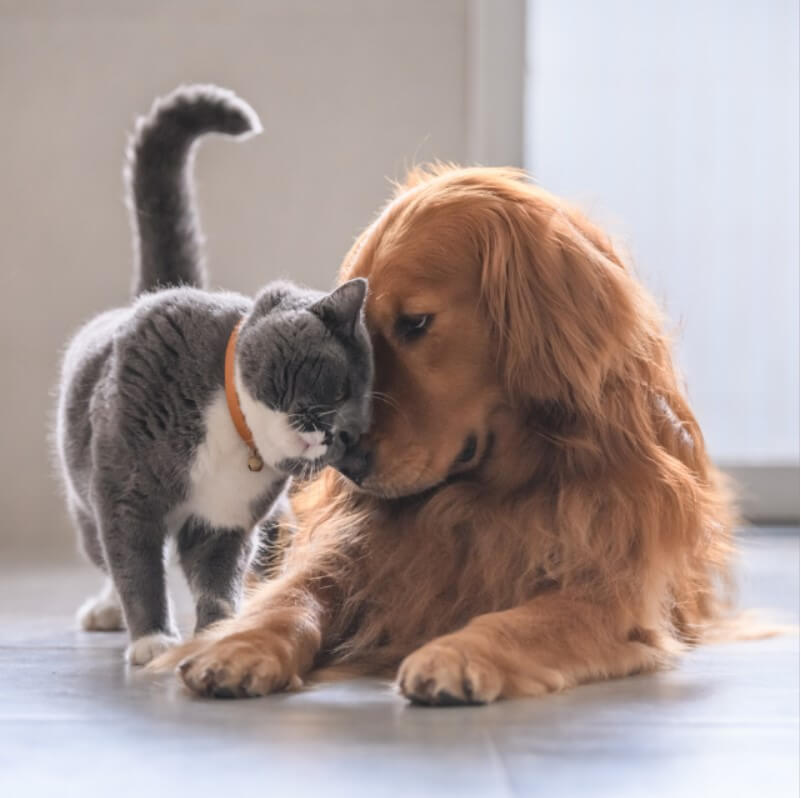 kedi ve köpekler