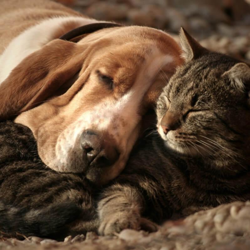 köpek ve kediler