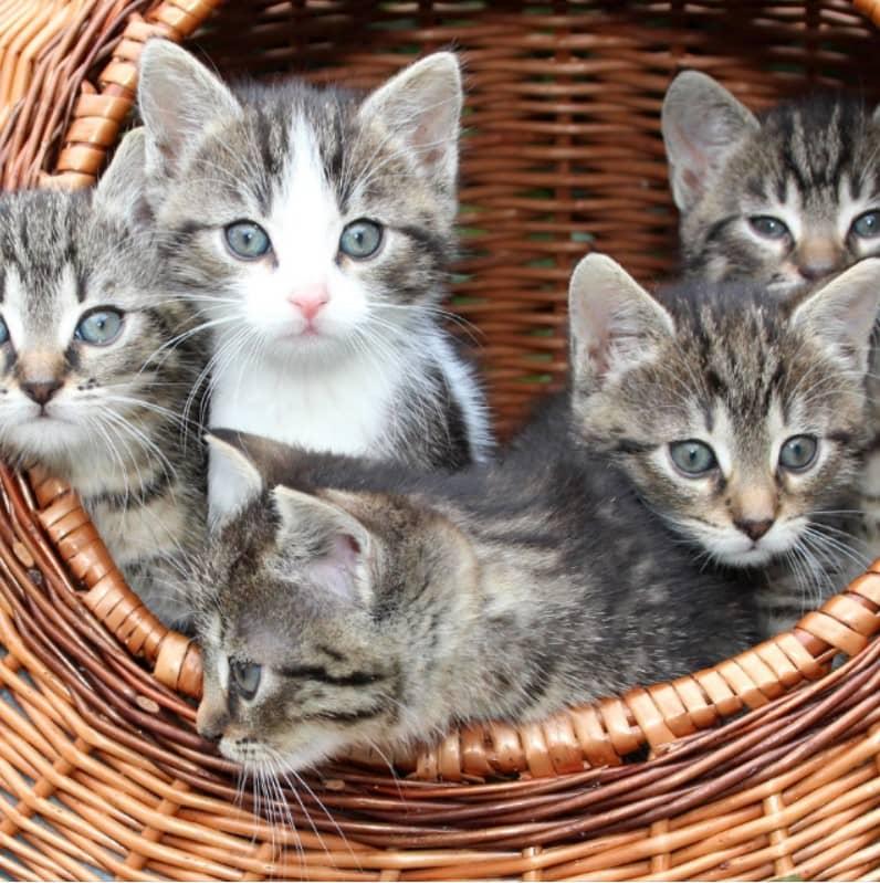kediler bilgiler