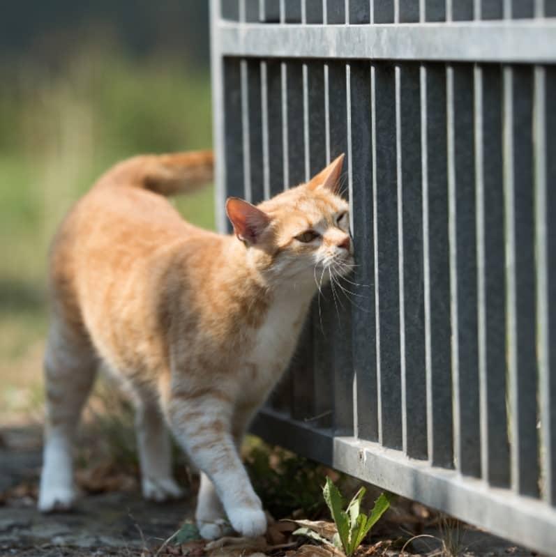 surtunen kedi