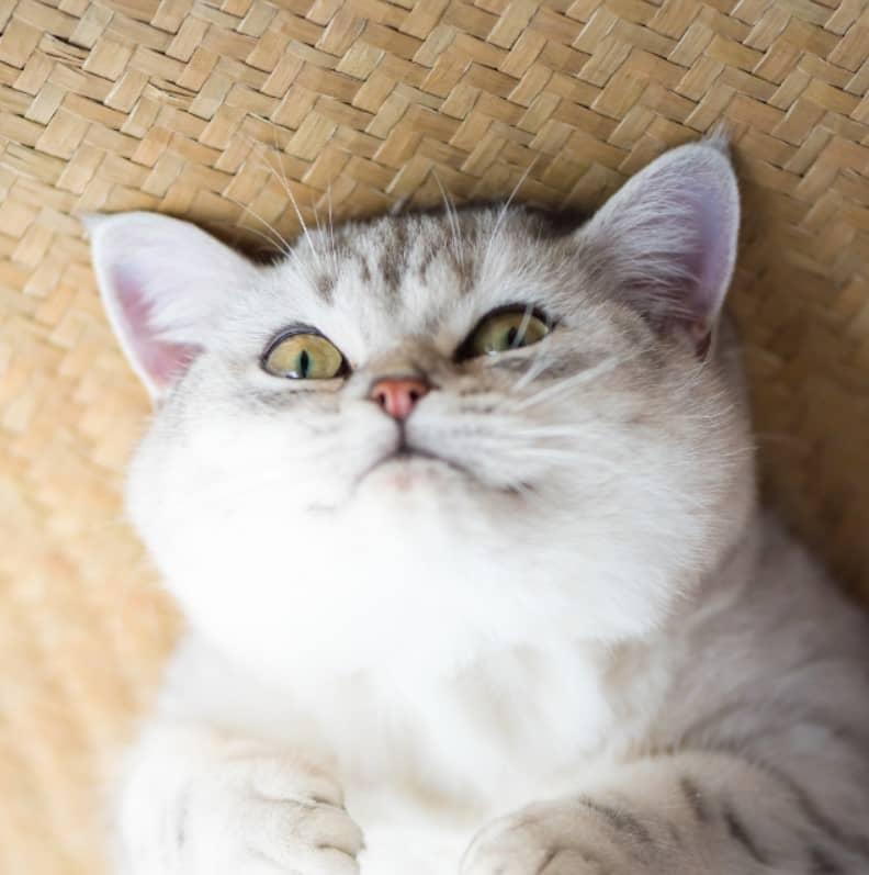 kediler neden mırlar