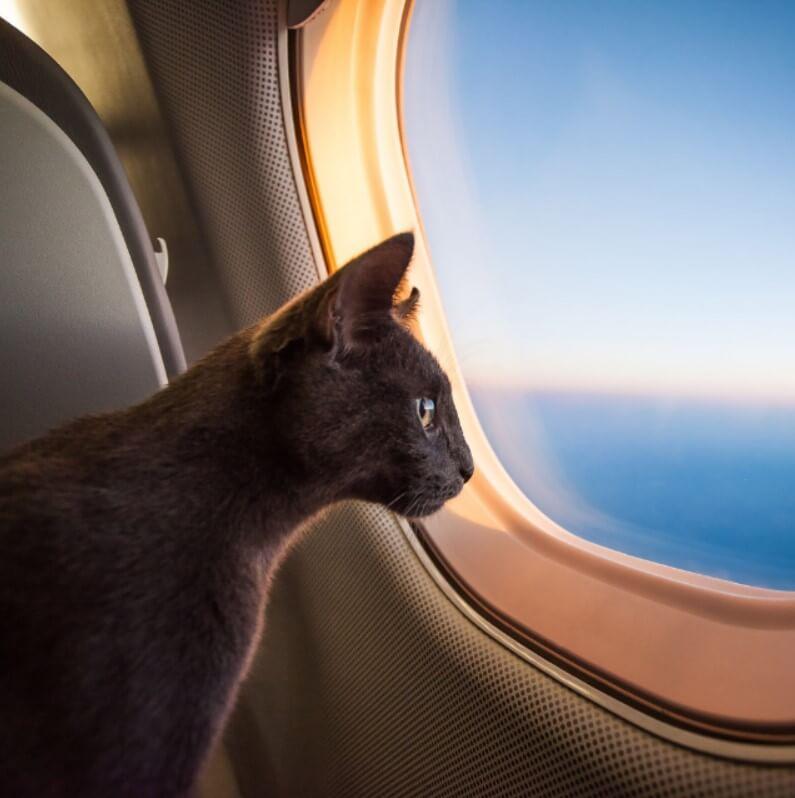 kedilerle yolculuk