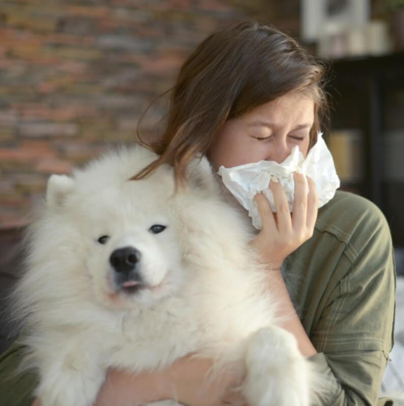 köpek alerji