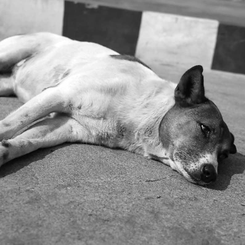 köpek kusma önlemleri