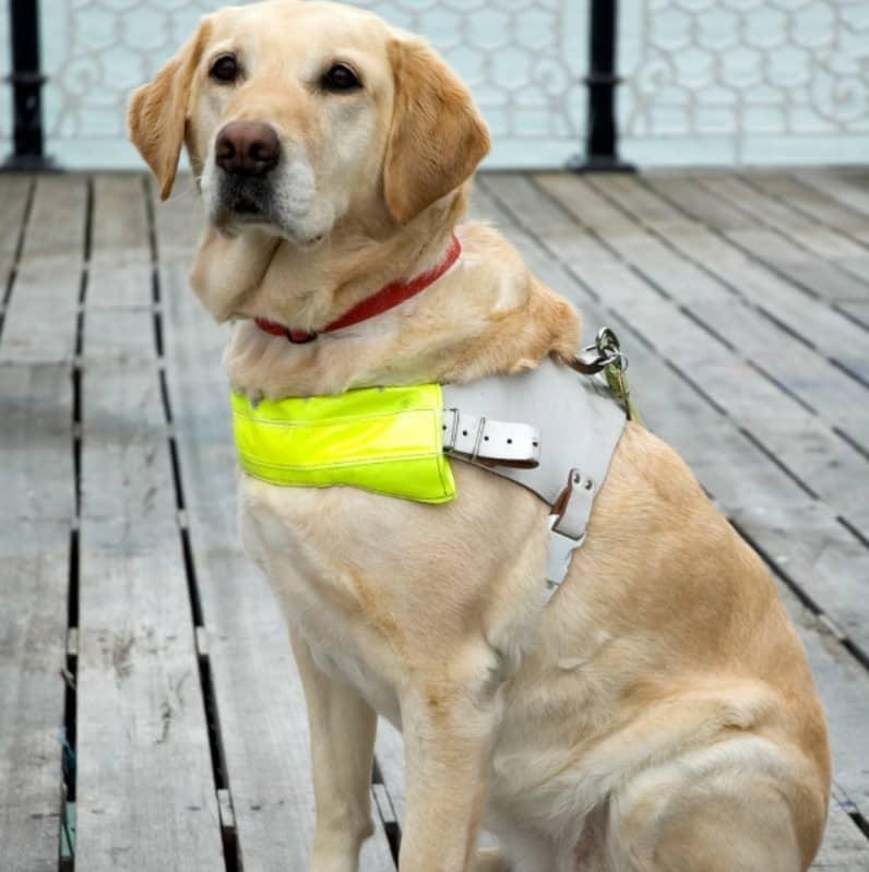 rehber köpek eğitimi