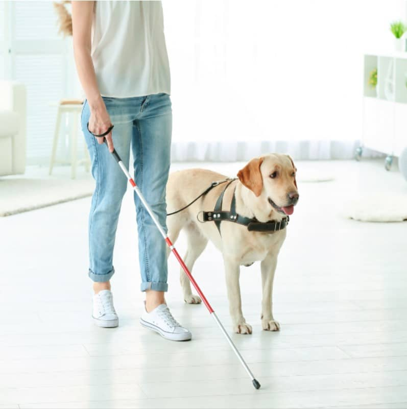 rehber köpek nedir