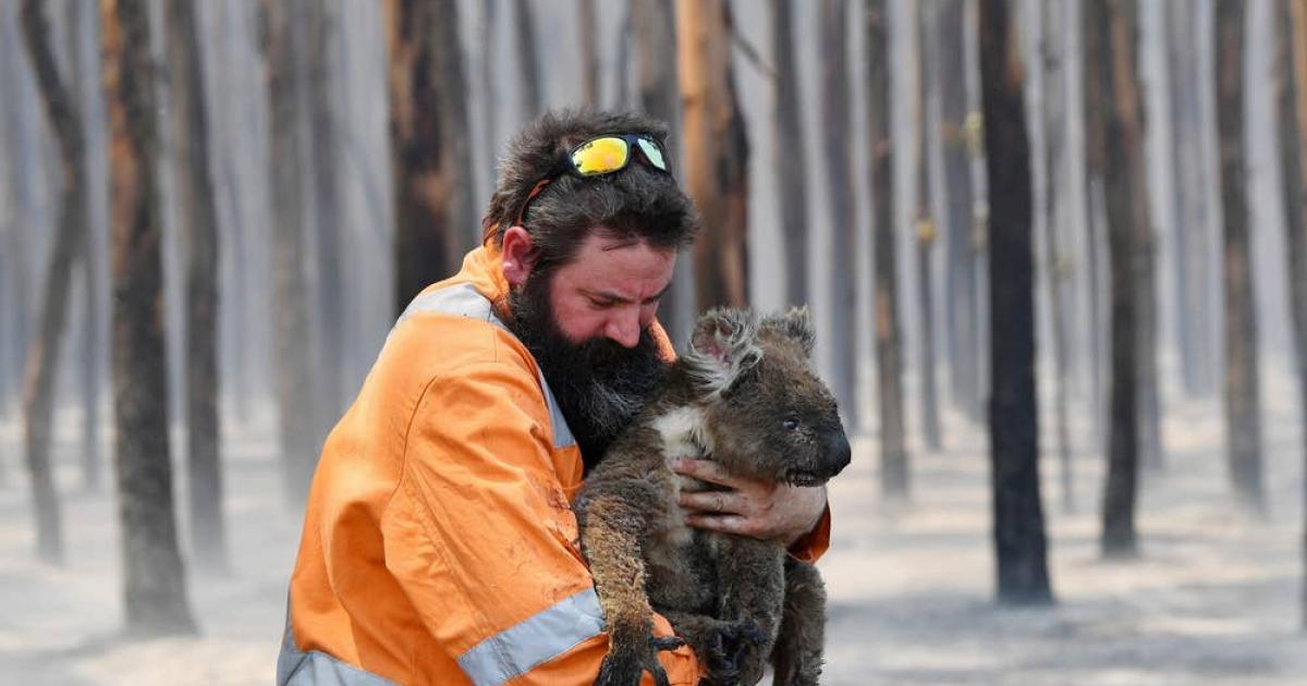 yangında hayvanlara ilk yardım