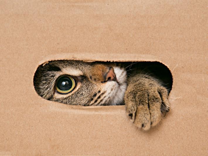kedilerin-dogum-ani