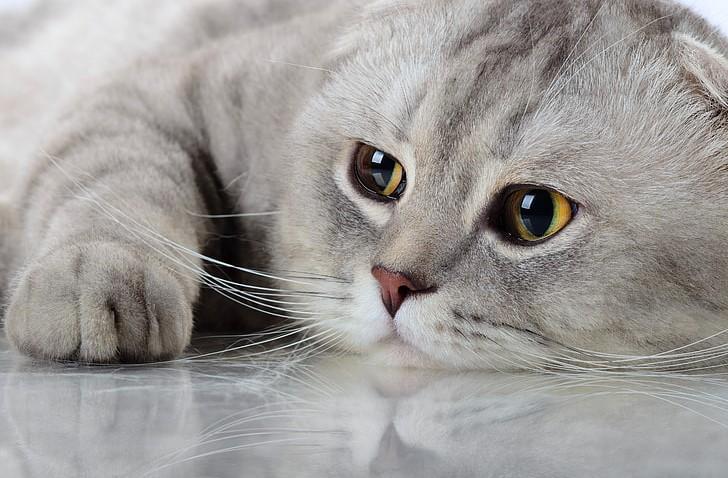 kediler kaç yıl yaşar