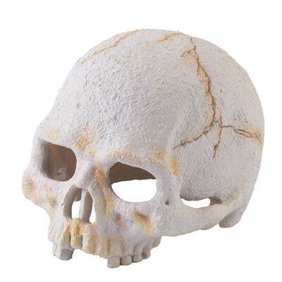 Exo Terra - Exo Terra İnsan Kafatası